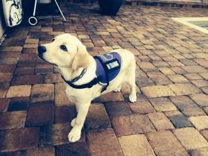 puppy-raisers-1