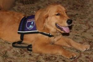 Eagle, Service Dog In Training