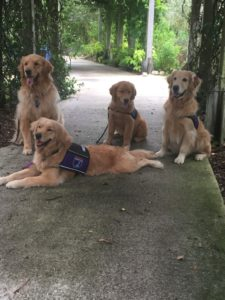 4 GAD Dogs at Mounts