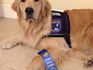 Thai achieves Canine Good Citizen status!