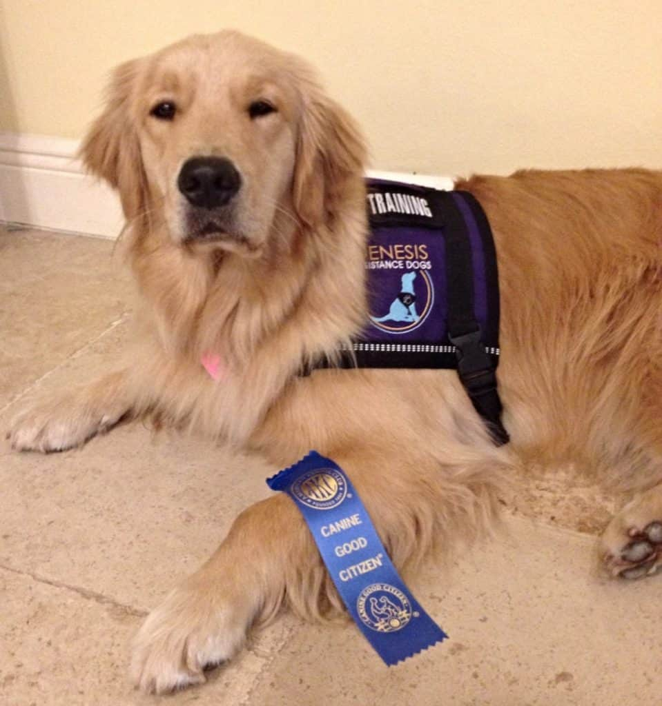 Thai achieves Canine Good Citizen status!