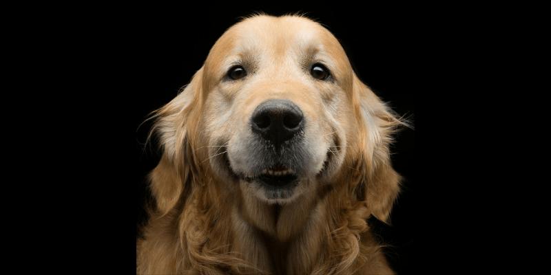 mobility service dogs miami
