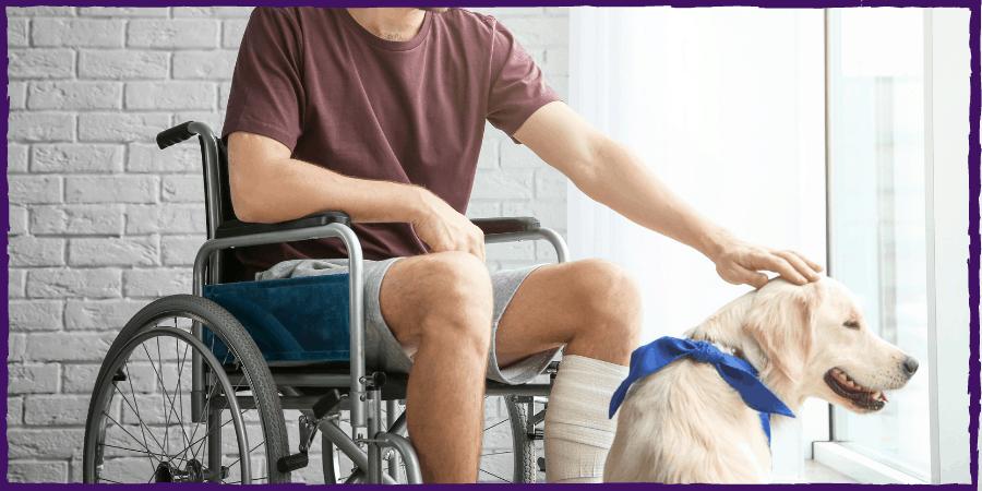 mobility service dog jacksonville