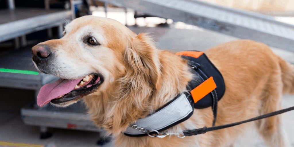 mobility service dogs in Florida